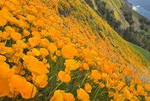 Big Sur Beauty / by Esalen Institute
