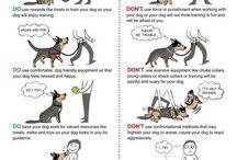 Dog Training  / by Jody Raines