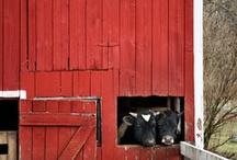 Farm<3 / by Anna Nyszczy