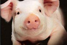 Oink!! / by Robbin Nottingham