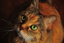Kitties! / by Ashley Carnes