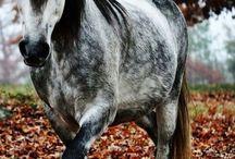 horses / by Amber Herring