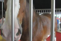 Horses / by Staci Steely Forsythe