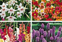 Gardening / by Kathleen Kerley