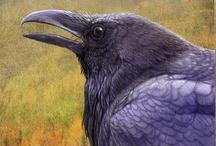 Ravens / by Lori Nelson
