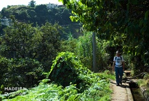 Madeira walks / by Nature Meetings
