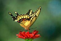 Winged Beauty / by Debra Taylor