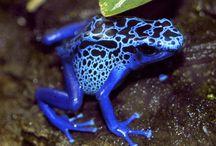 Amphibians / by Jon M Cole