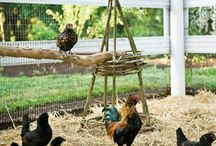 Chicken Coops & ideas / by Tania Lang