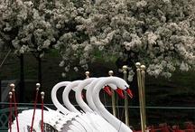 Swan / by Chloé Fleury