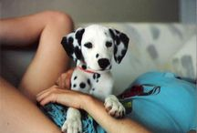 Animals  / by Jessica Baptista