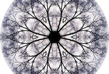 Mandala / by Mike Nixon