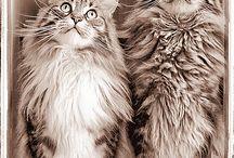 Cuteness Overload / by Brittny Drye