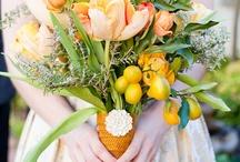 Citrus / by Aronia C.