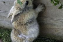Bunnies / Because I love my fur baby bunny! / by Laura Jaster