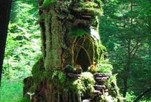 Fairy Gardens, Miniature landscapes / by Susan Harper