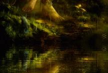 enchantment / by Judy Johnson