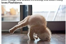 Animal Yoga / by Chopra Centered Lifestyle