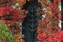 ♔ Autumn / Autumn / by Anita Rendon