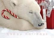 Winter Wonderland / by Carol Crawley