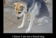 love = dog / by Christen McClelland