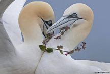 Wildlife / by Julia Margaret