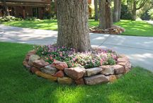Front yard / by Shannon P