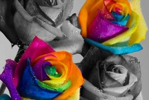 a tint of color / by Barbara Vigil