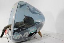 Kitty / by Sarah Federspiel