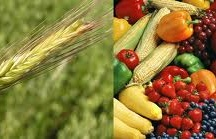 Food & Agriculture / by Diana Taylor