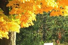 Autumn / by Vivian Higgins