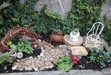fairy gardens / by Lilicu