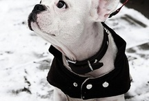 Frenchies / Awh-worthy French Bulldogs / by Dayna McIsaac