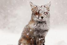 Fox Love / by Morgan Crampton