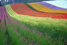 Gardening / by Victoria Inzerillo