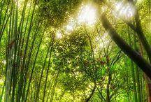 Beauty of Mother Nature / by J A N E T * S L A B O S Z - G R I G G S