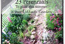 Annuals/Perennials & Roses / by Jessica Allen & Lindy Allen