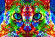KOLORFUL KITTIES! / MEOW CHICKA MEOW MEOW / by greencateyes