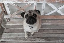 Puggles / by Autumn H