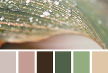 Colors / by Shivangi Bajaj