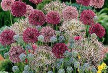 Gardening Inspiration / by Debbys Garden Links