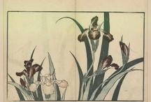 Hokusai / by GallicaBnF