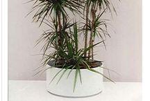 Plants / by Erica Ann