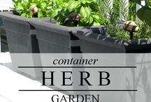 GARDEN Growing Herbs ♥ / Growing herbs from seed to harvest in containers, kitchen gardens, garden beds, and indoors. Tips, tricks, hacks, and ideas. / by Melissa @EmpressOfDirt.net  ❤