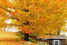 autumnal / by Tara McCraw Lutz