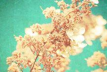 ----Just the colors ---- / by Cari Rakai