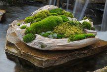 mosses and lichen / by karen colleran