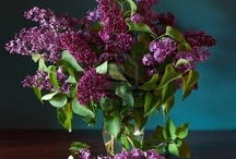 Heavenly Scent, Lilac  / by Rachel in Sydney