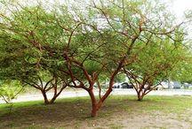 Árvores e Plantas do Meu Jardim / by Sandra Santos