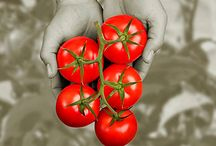 GMO / by Terroir Seeds